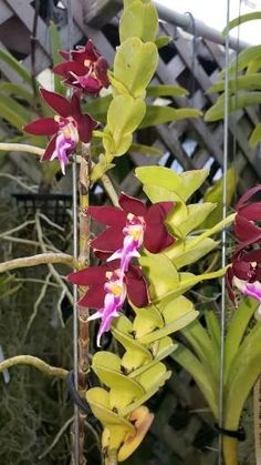 Some Sentences, Orchidaceae, Landscaping Company, Great Pictures, Houseplants, Indoor Plants, Orchids, Join, Gardening