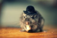 cute-hamsters:  I gave my little hamster buddy a hat today :)