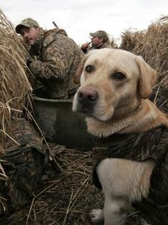 Gun Dog Training Tips: How to Correct Bad Behavior in the Blind | Outdoor Life
