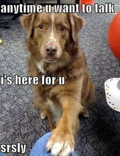 A dog you can rely on....