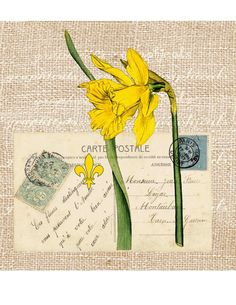 Paris spring digital download image Vintage daffodil French ephemera Carte Postale transfer to fabric paper burlap pillows tote bags No. 571