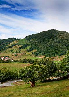 En las cercanías de Beruete, #Navarra. Campos, montes, castaños... naturaleza a tope.