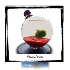 Marimo Moss Ball in Terrarium - hypnotizing beautiful decoration! So simple, so peaceful, so energizing! Your home or office would be a perfect new home for this decoration. In Japan, they treat Marimo Ball as a charm - make this one your charm   #marimomoss #marimomossball #moss #etsy #etsyseller #etsyshop #etsylove #etsyfinds #etsygifts #instagood #musthave #instacool #shop #shopping #onlineshopping #instashop #loveit #instafollow #photooftheday #picoftheday #love