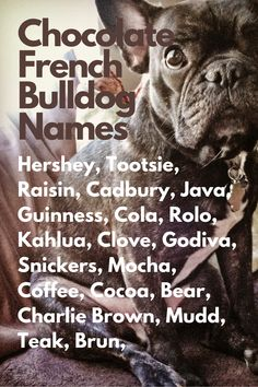 When you are anxiously waiting for your French Bulldog to join you, you may be thinking about French Bulldog names...Hershey, Tootsie, Raisin, Cadbury, Java, Guinness, Cola, Rolo, Kahlua, Clove, Godiva, Snickers, Mocha, Coffee, Cocoa, Bear, Charlie Brown, Mudd, Teak, Brun #FrenchBulldog #FrenchBulldogs #FrenchBulldogpuppy #FrenchBulldogpuppies #TheFrenchBulldog #cuteFrenchBulldogs #FrenchBulldogVideos #Frenchies #ChocolateFrenchBulldogs Chocolate French Bulldog, French Bulldog Names, French Bulldog Puppies, French Bulldogs, Mocha Coffee, Guinness, Raisin, Java, Charlie Brown