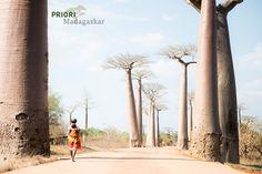 Die Baobab-Allee in Madagaskar. Bis zu 35 Meter hohe Baobab-Bäume ragen hier in den Himmel und bilden ein schönes, einzigartiges Reiseerlebnis. Copyright Aline Erne. Basel, Country Roads, Madagascar, Vacation Places, Ocean, Heavens, Places To Travel, World