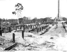 SANDAKAN 1945-10-24. NORTH EAST BORNEO FORCE. IN AN AREA OF NO. 1 COMPOUND OF SANDAKAN PRISONER OF WAR CAMP THE BODIES OF THREE HUNDRED PRISONERS OF WAR WERE DISCOVERED. THEY WERE BELIEVED TO HAVE ...