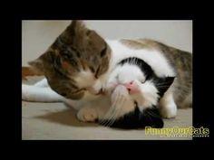 Talking Cat and Funny Cat Fails - http://aobcat.com/2016/06/18/talking-cat-and-funny-cat-fails/