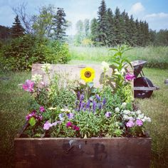 vintage trunk found in one of the old hen houses, 1 of 2 trunks i found and filled full of herbs and flowers specifically for our honey bees.