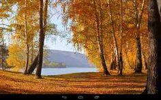 Resultado de imagen de imagenes de arboles en hd en otoño