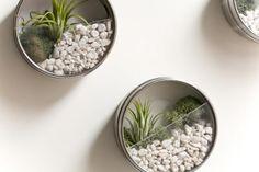 upcycle latas de bolachas vasos plantas