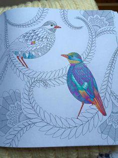 Tropical World A Colouring Book Adventure Millie Marotta