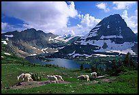 Mountain goats, Hidden lake and peak. Glacier National Park, Montana, USA.