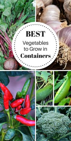 Container Gardening For Beginners These 16 vegetables are super easy to grow in containers. You'll need sunlight, good soil, water, and containers!