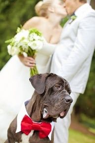 Couple and Dog Wedding Photo...that bow too cute