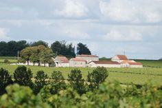 Balade Gourmande en Charente - Le vignoble de Grande Champagne, sa gastronomie, ses paysages, son achitecture et son histoire  #cognac #balade #gastronomie #paysages #artisanat