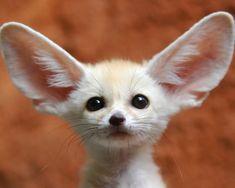 20 adorables animales bebés - Notas - La Bioguía