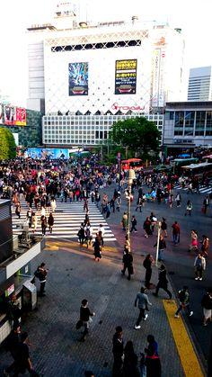 Shibuya Crossing Scramble view from Starbucks