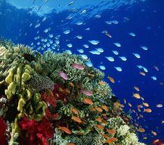 Peaceful reef