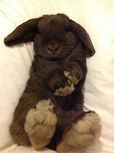 This one who naps on his back to avoid future wrinkles. | 23 Bunnies Snoozin'