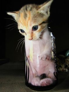cat humor l Love #Cats? Click here http://amazingcatvideos.com to Watch the world's amazing cat videos
