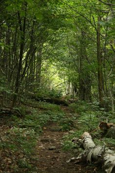 Sentier, Noonmark, Adirondacks, septembre 2015 Landscapes, Photos, Plants, Upstate New York, Pathways, September, Paisajes, Scenery, Pictures