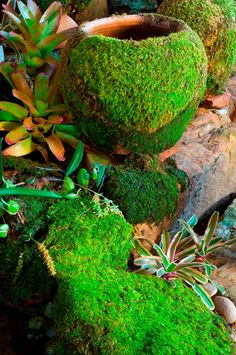How to Grow Moss on a Flower Pot. That would be really nice looking.