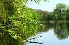 haagse bos den haag - vijver aan de oostkant #HaagseBos #vijvers