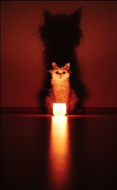 """....and den dey heard it....da roar of da...VACUMN CLEANER!!!"" - kitty ghost stories"