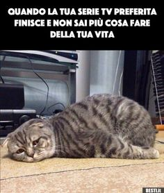 New memes riverdale italiano Ideas Funny Cat Captions, Funny Animal Memes, Funny Cat Pictures, Animal Quotes, Funny Photos, Funny Images, Funny Cats, Funny Animals, Funny Jokes
