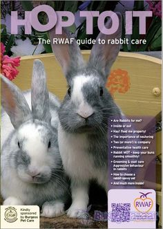 Our  fantastic new booklet covers all the necessary information you might need, especially if you're new to rabbits.  There's a lot for more experienced  owners too.  Follow our guidelines and you can't go wrong.    50 pages packed with great information and presented in a way we hope you'll find helpful    If you want to preview the content it's online too here http://rabbitwelfare.co.uk/pdfs/RWAbrochuremaster.pdf#    Multiple copy bundles are also available.