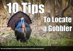 10 Tips to Locate a Gobbler - Tips and strategies from RedHead pro Rob Keck on locating spring turkeys. #turkeyhunting #huntingtips #tipsandtricks