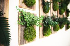 Fern and Moss Reclaimed Rustic Wood Hanging Flat -  Care Free, Real Preserved Plant. Moss and Fern Art.