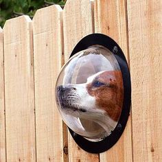 Dog window in the fence. If we had a fence, this would so be happening! Tole Pliée, Diy Pet, Dog Milk, Dog Fence, Dog Window In Fence, Cool Inventions, Pet Accessories, Four Legged, Mans Best Friend