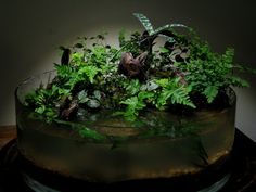 I've been reading a lot on the planted tank forums and came across some very cool mini paludariums called Wabi Kusa. Moss Terrarium, Terrarium Plants, Ikebana, Another Green World, Planted Aquarium, Aquarium Aquascape, Aquascaping, Indoor Water Garden, Moss Plant