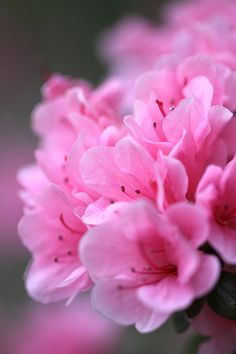 flowers #pink