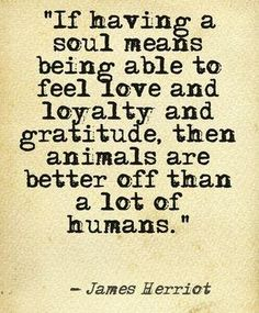 If having a soul means being able to feel love and loyalty and gratitude then animals are better of than a lot of humans, -James Herriot Dog Quotes, Animal Quotes, Words Quotes, Wise Words, Life Quotes, Dog Sayings, James Herriot, James Thurber, Soul Meaning