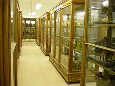 SE múzeum - Anatómia