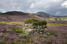 Heather landscape in Scotland.  http://www.marphotographics.co.uk/selected-photo.php?picid=172