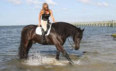 Juanita Lunn watches as Fokke, a Frisian, plays in the Indian River Lagoon at Sebastian's Riverview Park