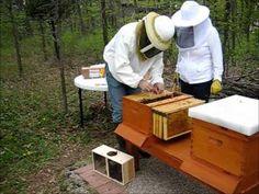 Backyard Beekeeping Part 16: 2nd Season, Hiving 2 Packages of Bees