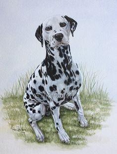 Watercolour+Dalmatian+dog+portrait+painting,+painting+by+artist+Anne+Zoutsos