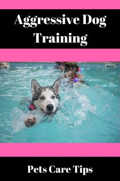 Obedience Training Pertains To A Wide Variety Of Skills And
