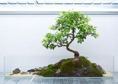 Aquarium Landscape, Backyard Garden Landscape, Freshwater Aquarium Shrimp, Garden Terrarium, Terrarium Ideas, Moss Terrarium, Container Water Gardens, Moss Plant, Aquarium Design