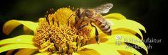 nice Fotografie »Biene auf Sonnenhut«,  #Naturansichten