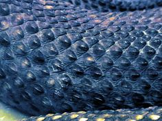 Snake Scales | The last one actually is a photo of reptile skin as seen ...