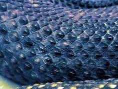 snake skin - amazing