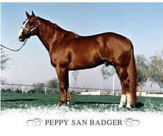famous quarter horse images | Peppy San Badger