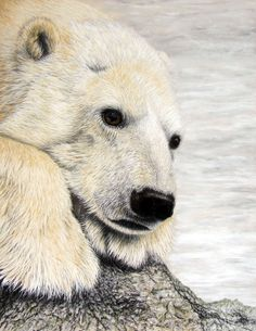chinese polar bear paintings | Polar Bear - Original Pastel Artwork BY Phil Daniels