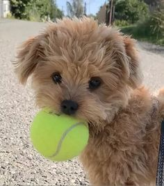 10 Wholesome Pups That Will Melt Your Icy Heart | Cuteness Cute Baby Dogs, Super Cute Puppies, Baby Animals Super Cute, Cute Little Puppies, Cute Little Animals, Cute Dogs And Puppies, Cute Funny Animals, Cute Babies, Doggies