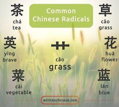 Many of the characters that have the 艹 grass radical on the top are associated with plants. Mandarin Lessons, Learn Mandarin, Chinese Phrases, Chinese Words, Chinese Lessons, French Lessons, Spanish Lessons, German Language Learning, Spanish Language